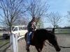 nikola-konj